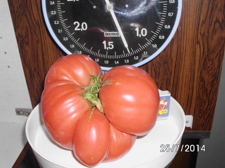 Rajce 1,25 kg - 25.7.2014